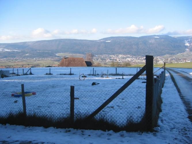 Hundeschule Berghof